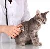 Ветеринарные клиники в Холме